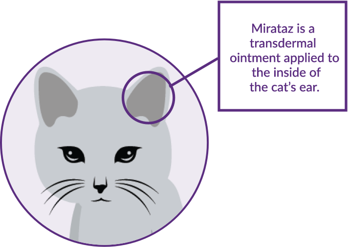 Where to apply ointment in a cat's inner ear illustration.