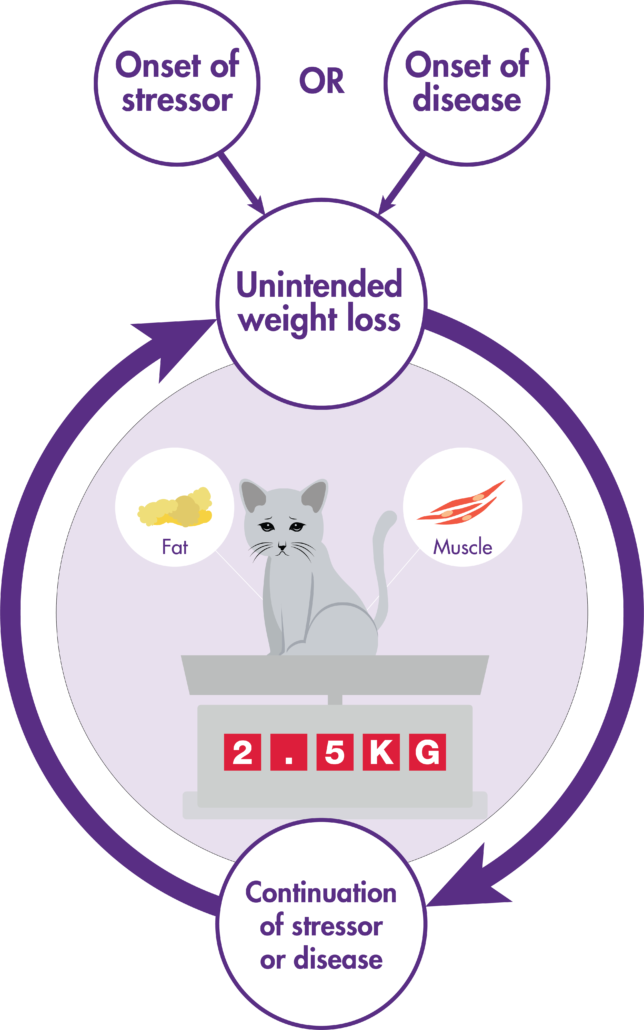 How to manage cat weight loss